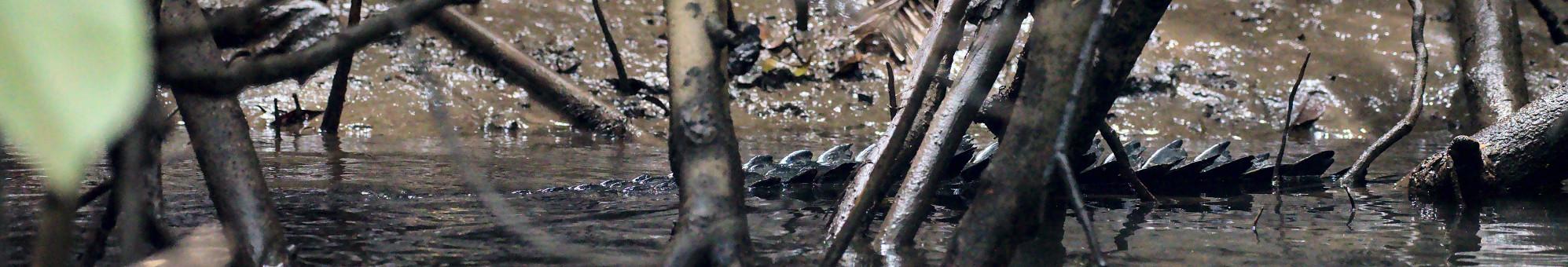 Big lizards and multicolor birds feature image
